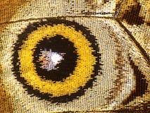 Часть нижней стороны голубой бабочки morpho, высокого увеличения крыла Стоковое фото RF