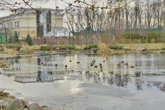 Часть озера зимы в парке Стоковые Изображения