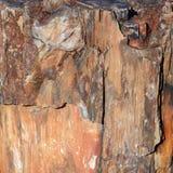 Часть окаменелой древесины стоковое фото