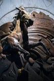Часть лошади скульптуры Стоковое Изображение RF
