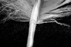 Часть пера голубя Стоковые Изображения