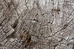 Часть поперечного сечения деревянных журналов Стоковые Изображения