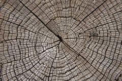 Часть поперечного сечения деревянных журналов Стоковое фото RF