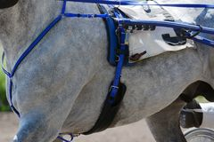 Часть породы рысака лошади на неверном движении Лошадиные скачки проводки в деталях Лошадиные скачки проводки в деталях Часть тро Стоковое Изображение