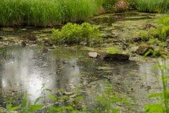 Часть русла реки Стоковая Фотография