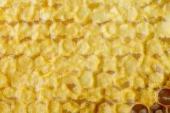 Часть сота с полными клетками Заново вытягиванный beeswax сота пчелы меда изображение сота предпосылки близкое вверх Стоковая Фотография