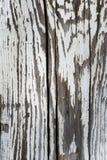 Часть старых деревянных доск с слезать белую краску, предпосылку Стоковые Изображения RF