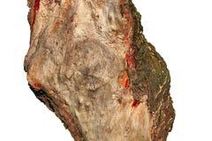 Часть ствола дерева в форме диаграммы Стоковые Изображения