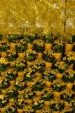 Часть стены украшенной с желтыми цветками Kalanchoe Стоковая Фотография RF