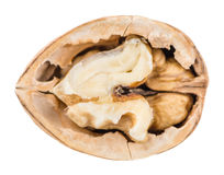 Часть стерженей грецкого ореха изолированных на белизне Стоковое Фото