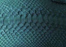 Часть сумки Стоковые Изображения RF