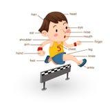 Часть терминологии тела Стоковые Изображения RF
