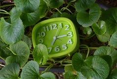 Часы в заводах Стоковые Фото