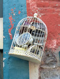 Часы в клетке птицы Стоковые Изображения RF