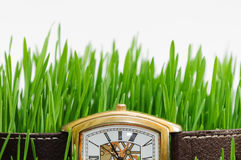 Часы в траве Стоковое фото RF