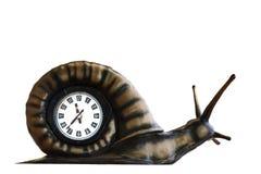 Часы в форме улитки Стоковые Изображения RF