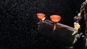 Чашка грибков Стоковая Фотография RF