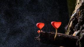Чашка грибков Стоковые Изображения RF