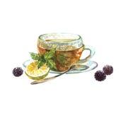 Чашка зеленого чая акварели реалистическая Стоковая Фотография RF