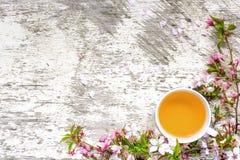 Чашка зеленого чая и ветви blossoming Сакуры и вишни Стоковое Изображение RF