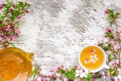 Чашка зеленого чая и чайник с ветвями blossoming Сакуры и вишни Стоковое Изображение RF
