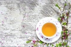 Чашка зеленого чая на поддоннике и ветви blossoming Сакуры и вишни Стоковое Изображение RF