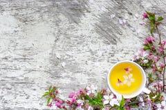 Чашка зеленого чая цветка и ветви blossoming вишни Стоковая Фотография RF