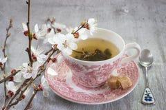Чашка зеленого чая Стоковое Изображение