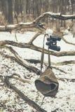 Чашка и бинокли вися в мертвой ветви дерева Стоковое Изображение