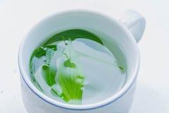 Чашка нежности запачканная и мягкая фокуса зеленого чая, Kariya, создавать, paniculata Andrographis, акантовые, завода лист с бел Стоковые Фотографии RF