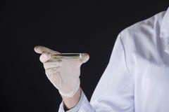 Чашка Петри с заводами в руках биолога Стоковая Фотография