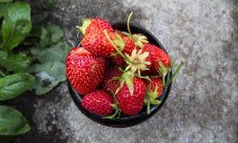 Чашка свеже выбранных очень вкусных красных органических клубник Стоковые Фото