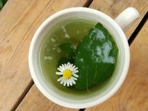 Чашка травяного чая на белой предпосылке стоковая фотография rf
