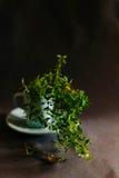 Чашка травяного чая с тимианом на темной предпосылке с космосом экземпляра Стоковые Фото