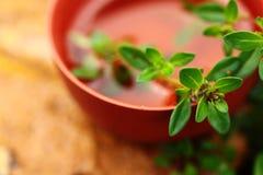 Чашка травяного чая с тимианом Стоковое фото RF