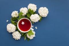 Чашка чаю и белые цветки на голубой предпосылке, взгляд сверху Стоковое Изображение