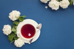 Чашка чаю и белые цветки на голубой предпосылке, взгляд сверху Стоковая Фотография