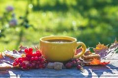 Чашка чаю на солнечный день осени Стоковое Фото