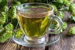 Чашка чаю со свежими дикими хмелями стоковые фото