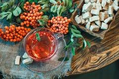 Чашка чаю с ягодами рябины (aucuparia рябины, ashberry) и желтым сахарным песком на деревянном столе Стоковая Фотография RF