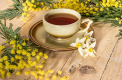 Чашка чаю украшенная с sprig мимозы и narcissus Стоковые Фото