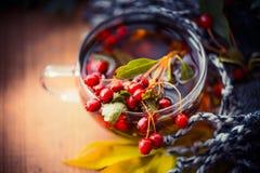 Чашка чая осени с красными ягодами, листьями падения и шарфом, взгляд сверху Стоковые Фото