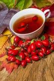 Чашка чая плода шиповника Стоковая Фотография RF