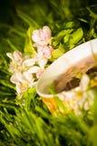 Чашка чая плодоовощей и зацветая цветок яблока Стоковое Изображение RF