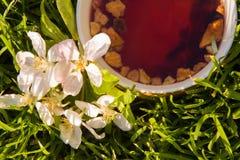 Чашка чая плодоовощей и зацветая цветок яблока Стоковое фото RF