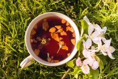 Чашка чая плодоовощей и зацветая цветок яблока Стоковая Фотография