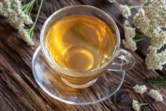 Чашка чая тысячелистника обыкновенного с свежим тысячелистником обыкновенным цветет стоковые фото