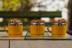 Чашки и сухие цветки Стоковые Изображения