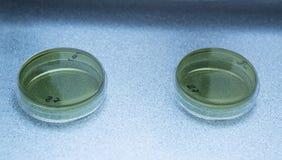 Чашки Petri на лаборатории Стоковые Изображения