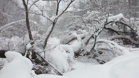 Чаща леса зимы видеоматериал
